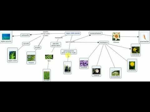 mappa parlante Giovanni piante