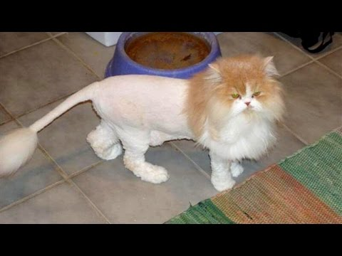 TRY NOT TO LAUGH or SMILE - Super FUNNY CAT videos