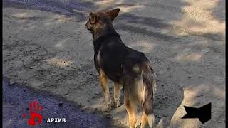 В Челябинске бойцовская собака напала на мальчика