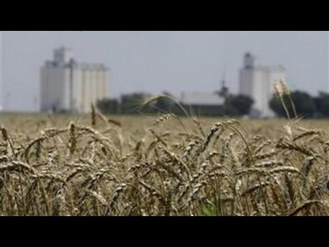 Low grain prices, high seed costs squeeze American farmers