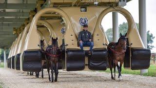 Horse Training Machine Is Like Rollercoaster