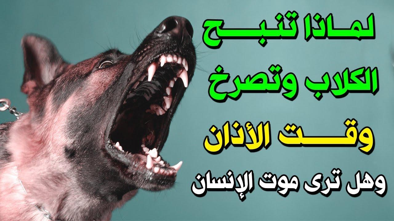 لماذا تنبح الكلاب وتصرخ عند سماع الاذان وهل يرى الكلب مـ ـوت الإنسان إجابة ستصدمك Youtube