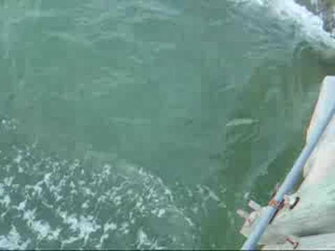 Pompano Pier Snook Fishing
