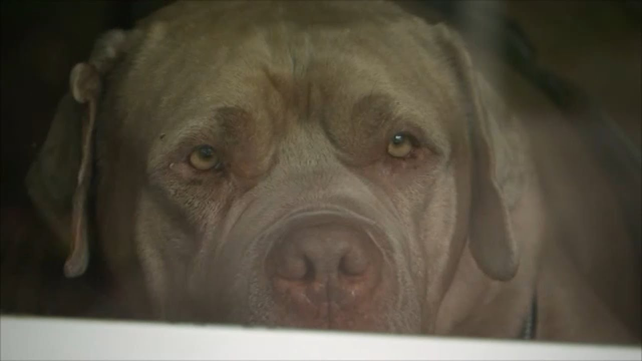 NEW JERSEY: Hero rescue dog Enzo bites and scares off intruder