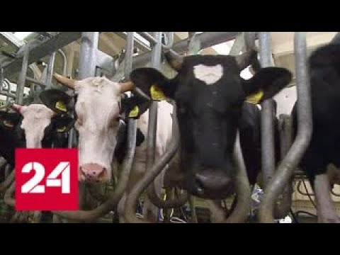 Вопрос: Каких сельскохозяйственных животных разводят в Московской области?