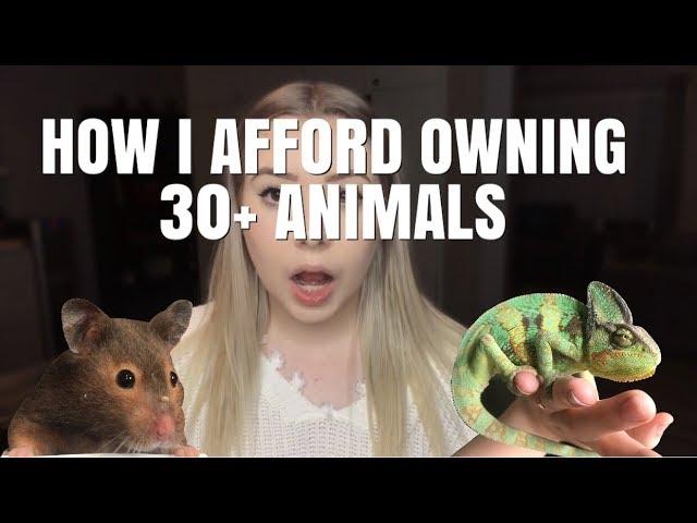 how-do-i-afford-owning-so-many-animals