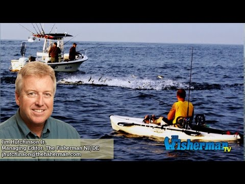 May 19 2016 new jersey delaware bay fishing report with for Barnegat bay fishing report