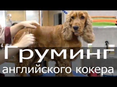 Объявления о продаже взрослых собак и щенков: немецкие овчарки, лабрадоры, хаски, чихуахуа, джек рассел терьеры, бульдоги, шпицы по доступным ценам. Купите породистого щенка недорого на юле.
