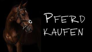 Pferd kaufen ✮
