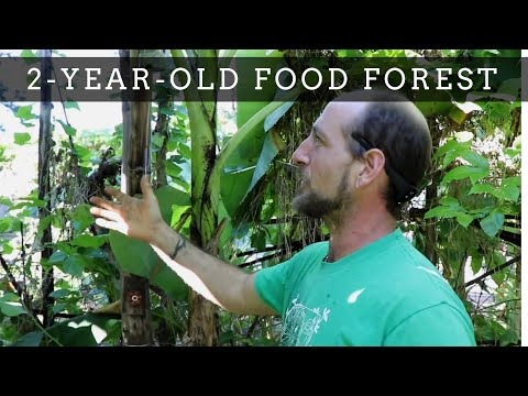 Food Forest Tour & Hugelkultur Beds @ Mosswood Farm Store