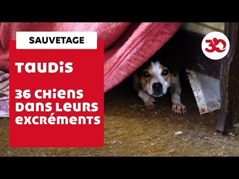36 chiens vivaient dans leurs excréments