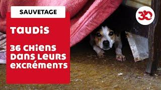 Video 36 chiens vivaient dans leurs excréments download MP3, 3GP, MP4, WEBM, AVI, FLV September 2017
