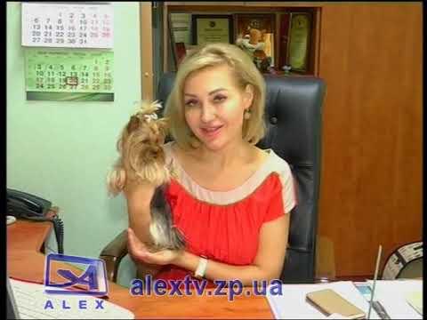 Алекс Телерадиокомпания: На работу с собакой