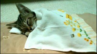 子猫のこだまちゃん!ぐっすり眠る。 thumbnail