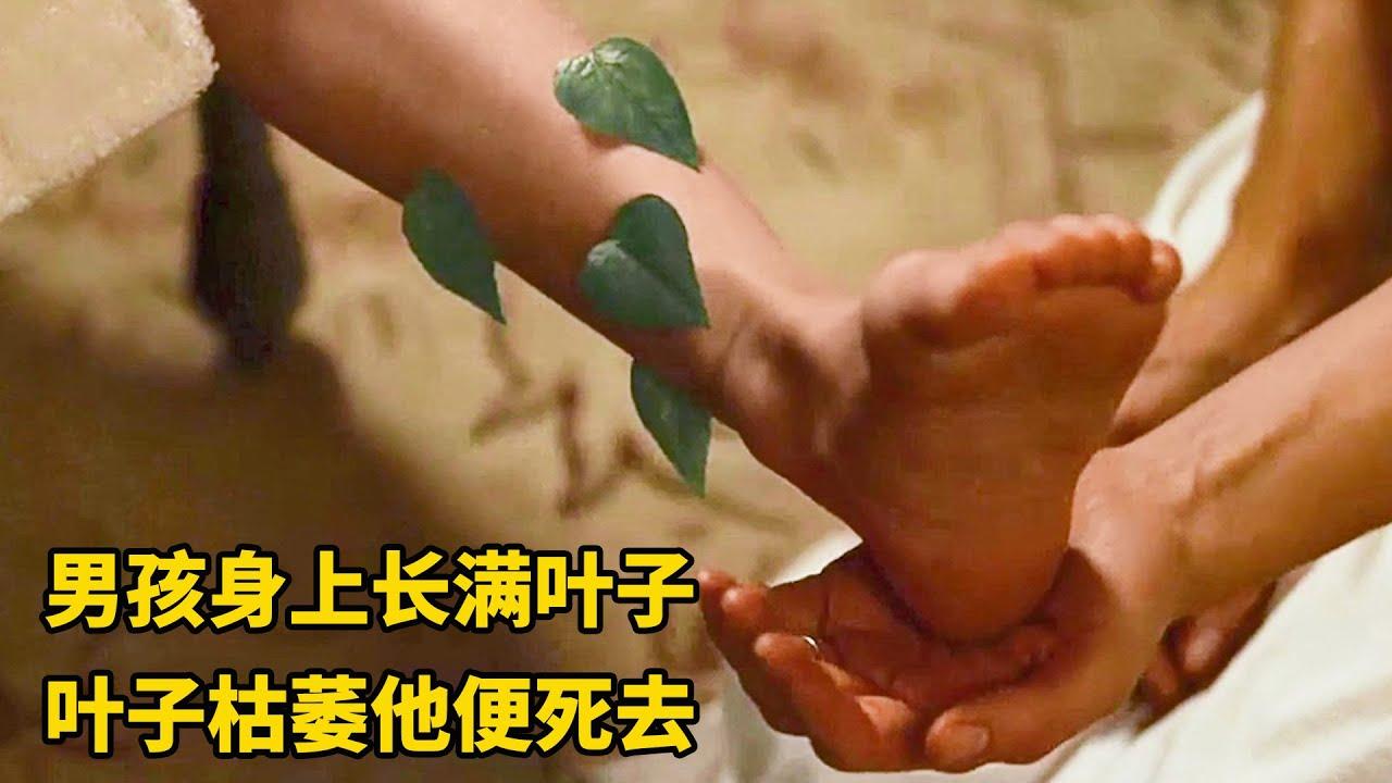 小男孩一出生,腿上就长满绿叶,绿叶枯萎掉落他便死去