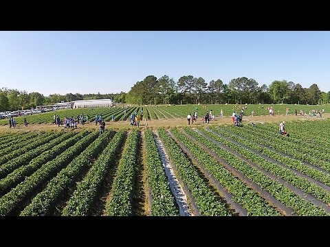 Agritourism Have Growing Impact on Cottle Strawberry Farm