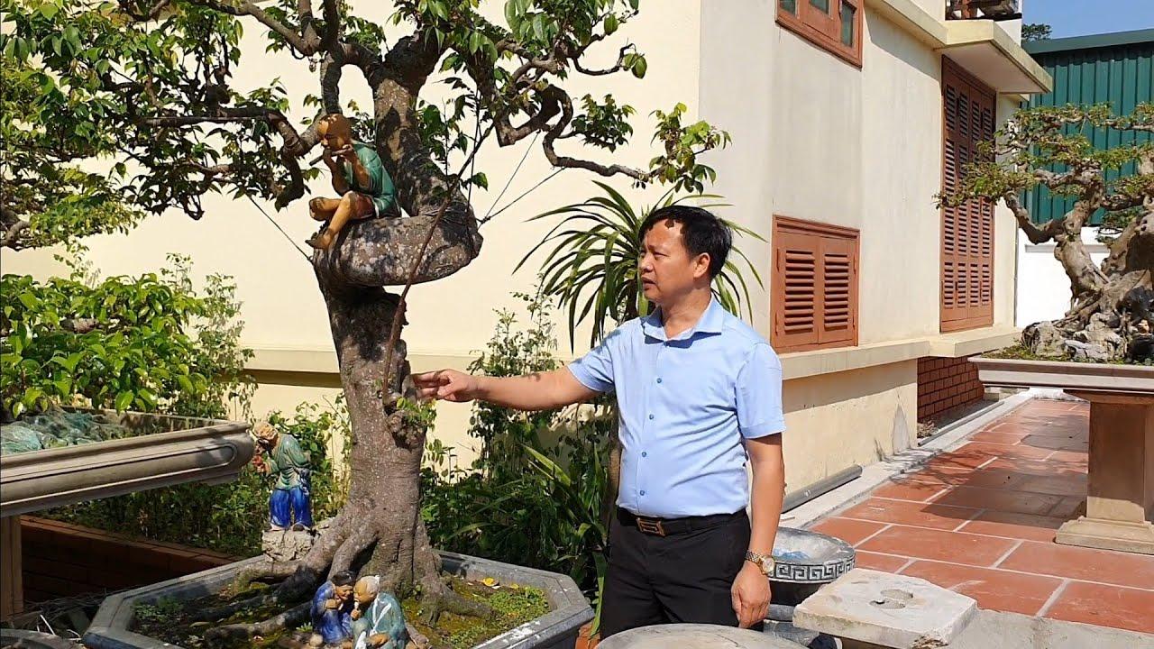SH.3275.Gặp một cây Khế đẹp như thế ở vườn cảnh anh Nguyễn Sỹ Quý. Sóc Sơn. Hà Nội.