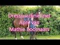 Dresuur met een springpaard | dressuurclinic | ls_horses
