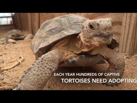 AZGFD Desert Tortoise Adoption Program