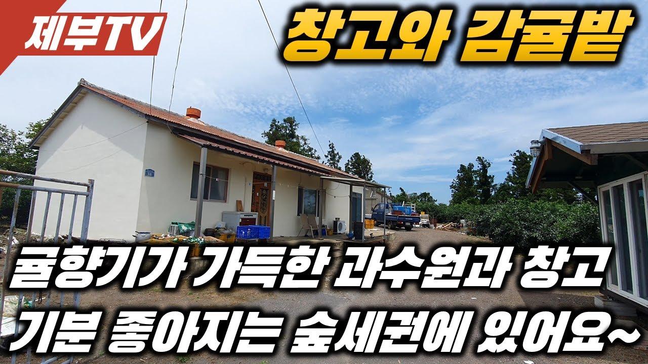 제주도 토지 매매,반딧불이 곶자왈로 유명한 곳 과세권에 위치한 곳에 창고딸린 과수원입니다~제주도 부동산 매물,Jeju House for sale,Korea,제주도부동산TV