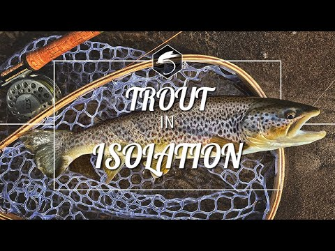 BROWN TROUT | EURONYMPHING | RIVER CLYDE
