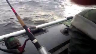 Лодка викинг 340 LS и мотор Suzuki DF 6 Рыбалка на судака