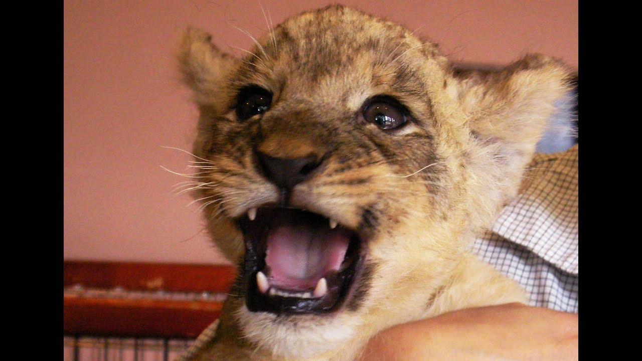 3 月 の ライオン rar