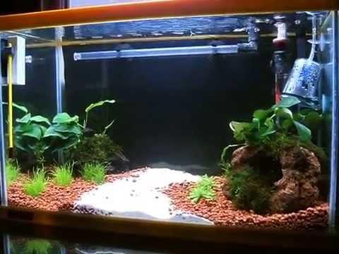 Acquario 22 litri 40cm avviato da 2 settimane youtube for Filtro vasca pesci