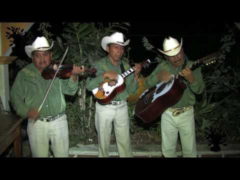 EL CAIMAN Trío Orgullo Poblano Pantepec [2012]