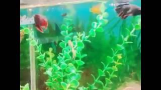 Уход за рыбками гуппи 🐟🐠