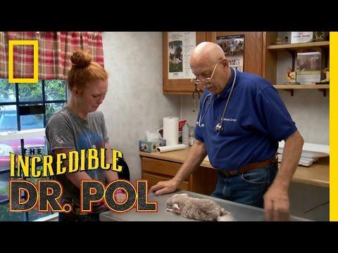 Kiwi's Last Call  The Incredible Dr Pol