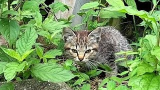 子猫発見。しかし警戒心強く逃げられる