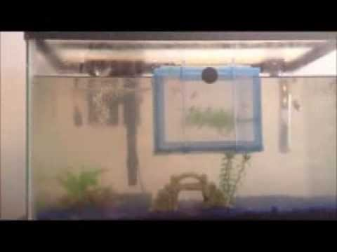 How to Perform an Easy Water Change Without a Gravel Vac