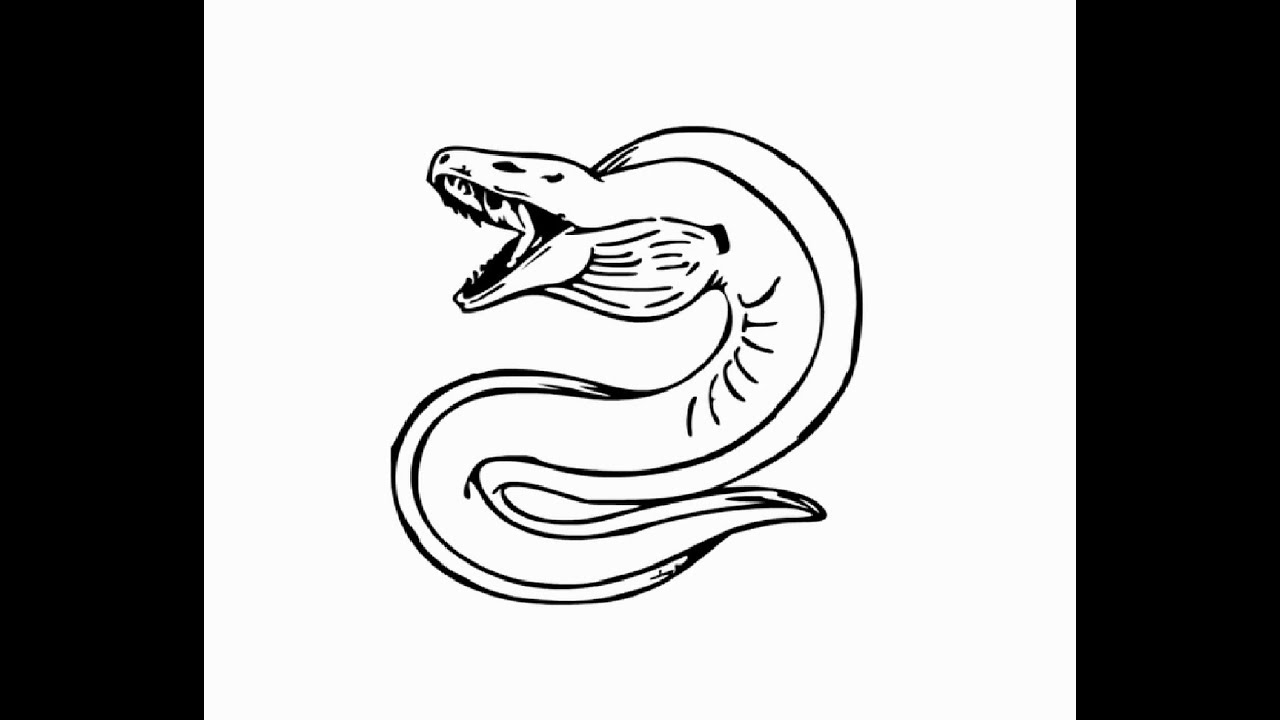 Best 50+ How To Draw A Electric Eel - hd wallpaper - photo#8