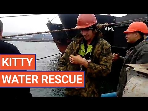 Incredible Kitten Water Rescue Video 2017 | Daily Heart Beat