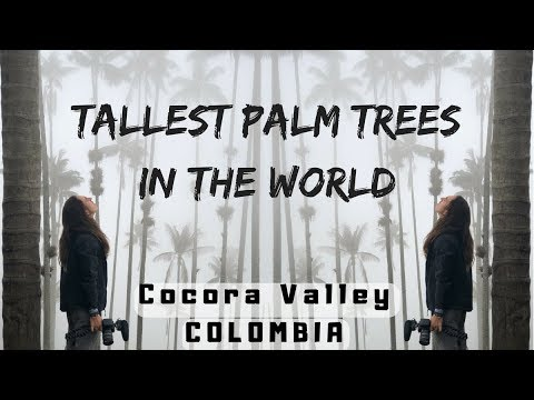 TALLEST Palm Trees in the WORLD - Colombia Travel Vlog Ep 6 - Cocora Valley / Salento / Armenia
