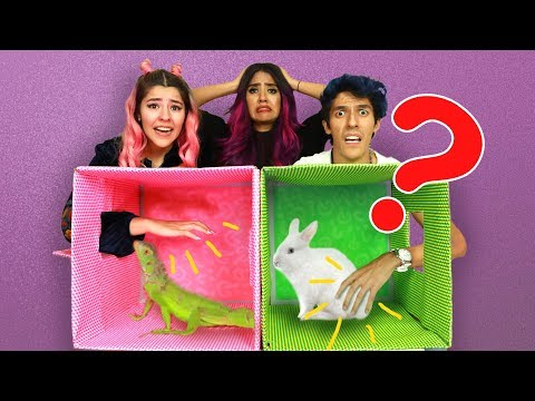 WHAT IS IN THE BOX? | POLINESIO CHALLENGE |  LOS POLINESIOS