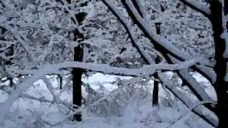 Ambient ghost music -- Wendover woods under snow
