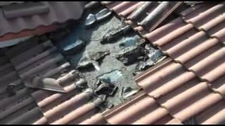 Летучие мыши под крышей(, 2012-01-25T05:47:05.000Z)