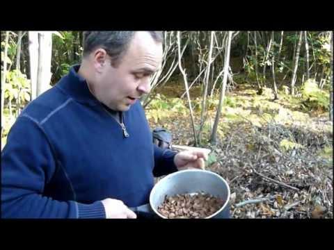 How to eat acorns