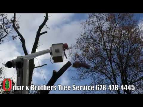 Commercial Tree Service And Removal Experts In Atlanta