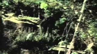 Mr. Murder Trailer 1998
