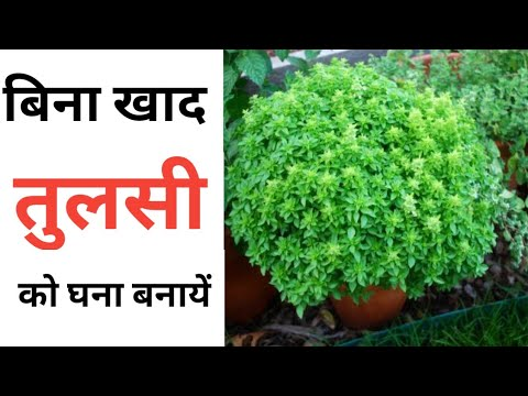 rooftop vegetable garden ideas in hindi