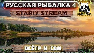 ОСЁТР и СОМ Русская рыбалка 4 Russian fishing 4 РР4 ФАРМ