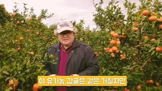 제주 성산 유기농 감귤 재배 바이탈 농장주 엉클 베토벤