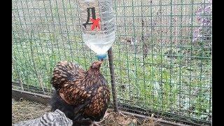 Ниппельная поилка за пару минут своими руками (для кур, цыплят, перепелок, цесарок и другой птицы)