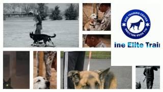Canine Elite Training