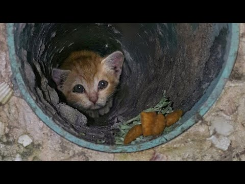 15 Unbelievable Animal Rescues