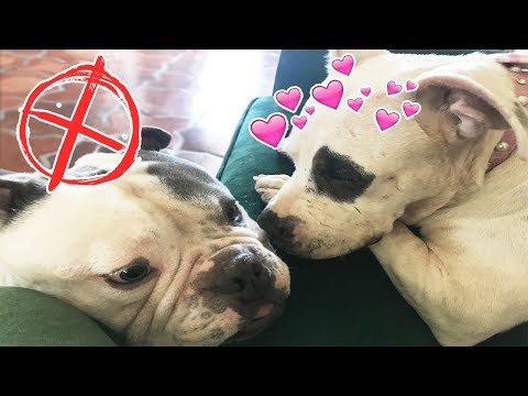 OUR NEW RESCUE DOG ELLIE MEETS ALL MY PETS! | NICOLE SKYES