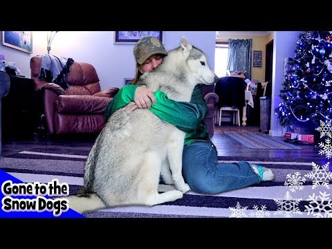 Hugging My Dog For Too Long | With Funny Commentary